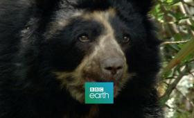 Meet The Bear (DOCU)